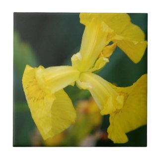 Gelbe Iris-Blumen-Fliese