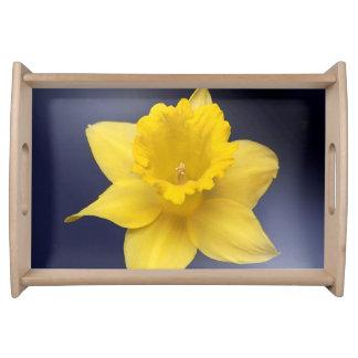 Gelbe Narzissen-Blume Blumenwatercolorfarbe Tabletts