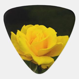 Gelbe Rose Plektrum