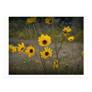 Gelbe schwarze Florida-Wildblume-Fotografie Postkarte