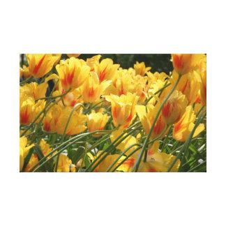 Gelbe Tulpen Leinwanddruck