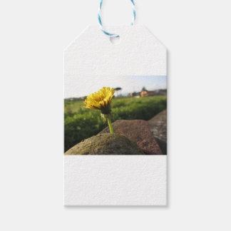 Gelbe Wildblume, die auf Steinen am Geschenkanhänger