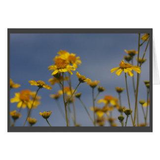Gelbe Wüsten-Wildblume Grußkarte