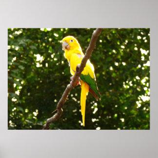 Gelber Papagei Poster