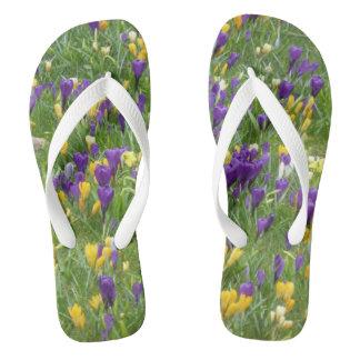 Gelber und lila Krokus-Erwachsener drehen Flip Flops