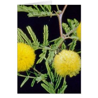 gelbes Klu, Popinae (Akazie farnesiana) Blumen Karte