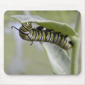 Gelbes Schwalben-Schwanzschmetterlings-Raupe Mauspads