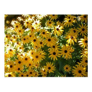 Gelbes schwarzes mit Augen Susans Postkarte