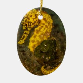 Gelbes Seepferd Ovales Keramik Ornament