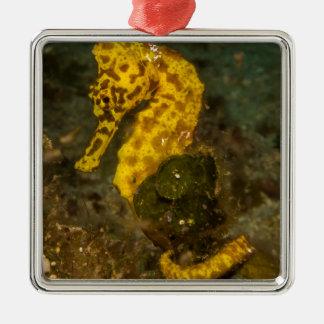 Gelbes Seepferd Quadratisches Silberfarbenes Ornament