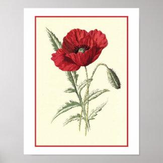 """""""Gemeine Mohnblumen-"""" botanische Illustration Poster"""