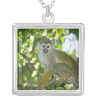 Gemeiner Eichhörnchen-Affe (Saimiri sciureus) Rio Versilberte Kette