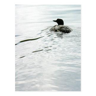Gemeiner Loon auf dem Wasser Postkarte