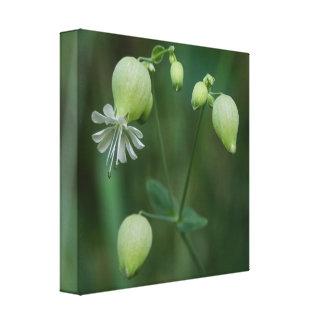 Gemeines Leimkraut-weißer Wildblume-Leinwand-Druck Galerie Gefaltete Leinwand