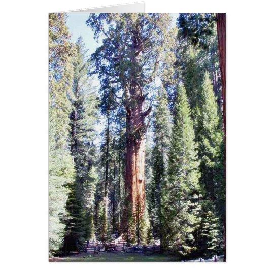 General Sherman Trees Forrests Grußkarte