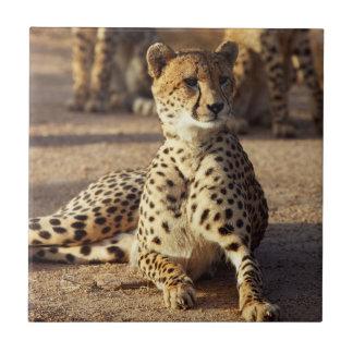 Gepard (Acinonyx Jubatus), Kruger national. Park Keramikfliese