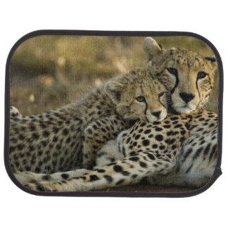 Gepard, Acinonyx jubatus, mit Jungem auf das Masai Autofußmatte