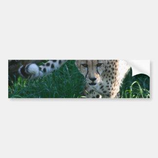Gepard auf der Jagd Autoaufkleber