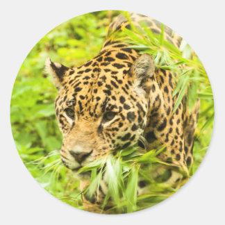 Gepard - Aufkleber