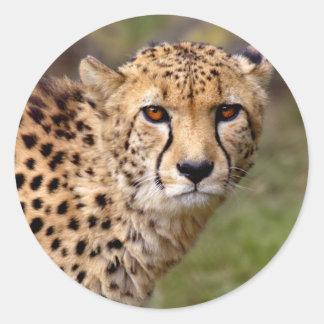 Gepard-Aufkleber Runder Aufkleber