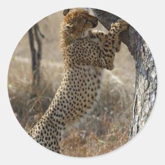 Gepard, der auf Baum klettert Runder Aufkleber