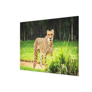 Gepard geht entlang einen Weg Leinwanddruck