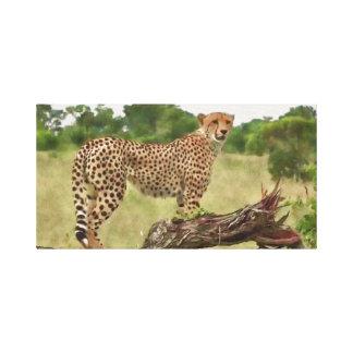 Gepard in Afrika Leinwanddruck