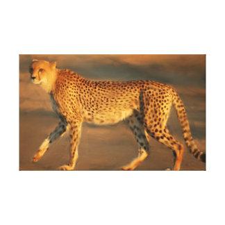 Gepard in der goldenen Stunde Leinwanddruck