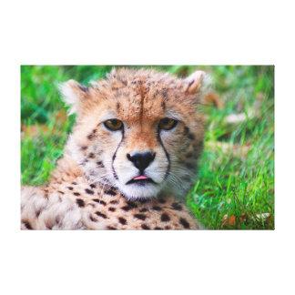Gepard Leinwanddruck