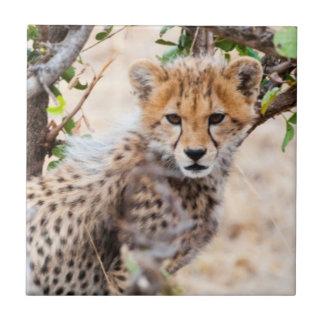 Gepard, Maasai Mara nationale Reserve Keramikfliese