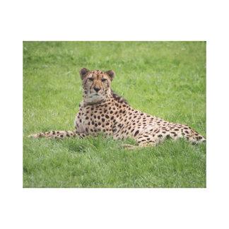 Gepard-Porträt Leinwanddruck