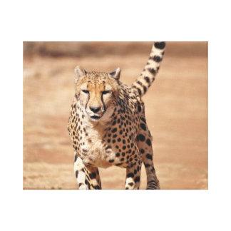 Gepardbetrieb Leinwanddruck