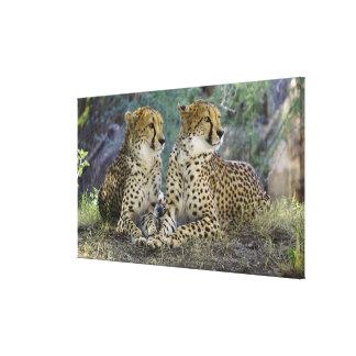 Geparden Leinwanddruck