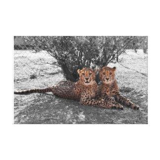 Gepardzwillingsstillstehen Leinwanddruck