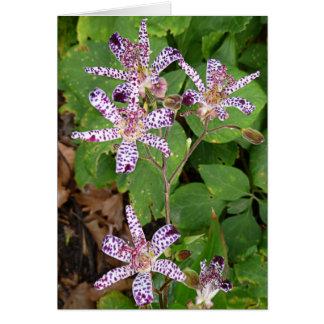 Gepunktete Kröten-Lilien-Blumen Karte
