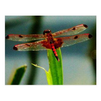 Gepunktete rote und schwarze Libelle Postkarte