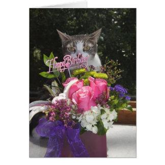 Gerade, knallend im niedlichen Katzen-Geburtstag Grußkarte