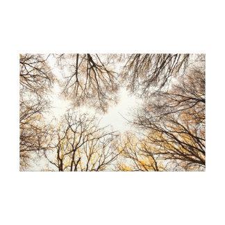 Gerade oben schauen durch Bäume Leinwanddruck