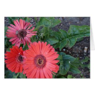 Gerbera-Gänseblümchen erhalten wohle Karte