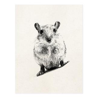 Gerbil-Baby-Tierillustrations-HaustierGerbils Postkarte