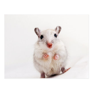 Gerbil-Baby-tierische niedliche Postkarte