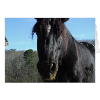 Gerettetes schwarzes Entwurfs-Pferd Karte