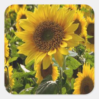 Geschenk sackt Sonnenblumen ein Quadratischer Aufkleber