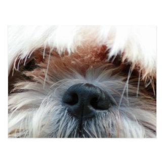 Gesichts-Bildgeschenke des Shih tzu Hundewelpen Postkarte