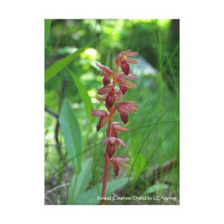 """Gestreifte Coralroot Orchideen-Leinwand 16"""" x 20"""" Leinwanddruck"""