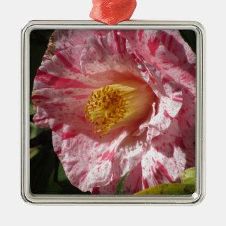 Gestreifte weiße Blume des Singles Rot der Kamelie Silbernes Ornament