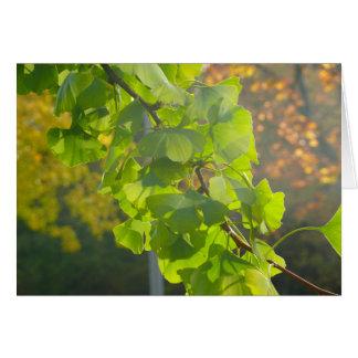Gingko-Blätter in der Herbstsonne Grußkarte