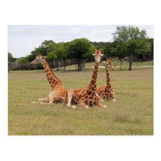 Giraffe drei an der versteinerten Kante Postkarte
