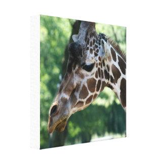 Giraffe eingewickelte Leinwand