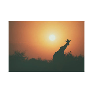 Giraffe im Sonnenuntergang Leinwanddruck